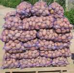 Реализуем картофель различных сортов, Беларусь