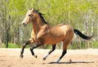 Лошади с откорма