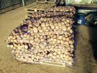 Картофель оптом Уладар