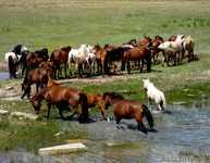 Лошади живым весом