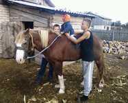 Отличный конь