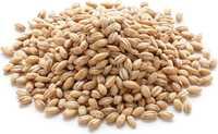 Пшеница 5 класс