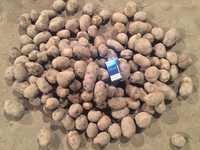 Продам картофель (мелкий)