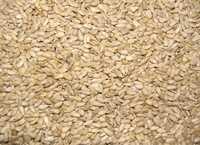 Ядро семени подсолнечника