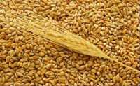 Мука пшеничная цельнозерновая ГОСТ Р52189-2003
