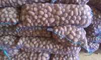 Картофель семенной Ред скарлет Картофель семенной, фракция 30-55 мм.,распродажа остатков