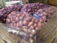 Картофель 2016 оптом от производителя (Брянская область)