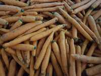 Морковь на переработку