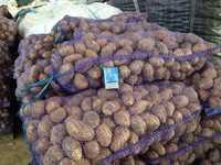 Картофель оптом от 20 тонн. Сорт Кроне. Вкусный
