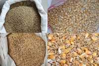 Кукуруза кормовая в мешках