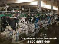 Агрегаты доильные трубопроводные / Линейный молокопровод