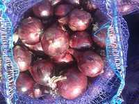 Лук репчатый фиолетовый