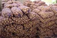 Картофель СЕМЕННОЙ дешево с доставкой Москва Санкт-петербург