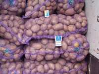 Картофель нового урожая