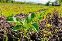 Земля для Фермера и придорожного бизнеса