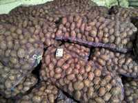 Картофель урожай 2016