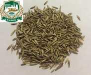 Фестулолиум. Семена фестулолиума