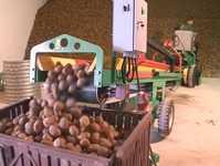 Лента конвейерная на скутер-подборщик картофеля СКП-40