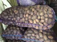 Картофель семенной: Галлла, Романа, Аврора