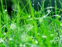 Ассортимент газонных трав