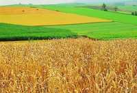 Продам или сдам в аренду землю сельхозназначения в Пензенской области