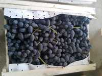Виноград свежий черный МЕРС из Узбекистан