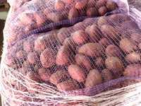 Продажа картофеля оптом. Брянская область