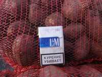 Продовольственный картофель оптом срочно
